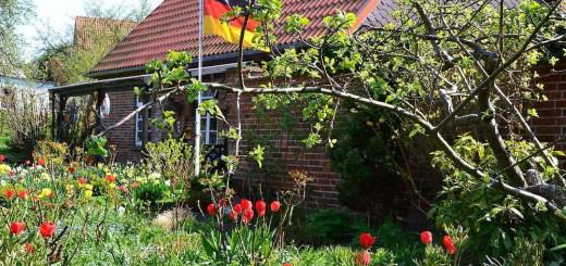 Vorgarten mit Tulpen und Deutschlandfahne