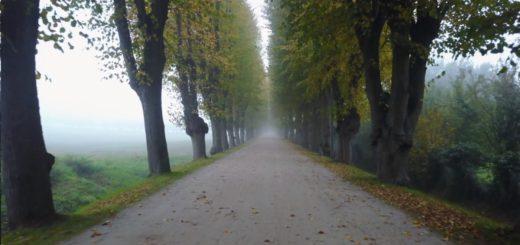 Allee zum Schloss Bothmer im Nebel